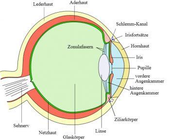 Das Auge und das Licht - ©Wikipedia.org - Talos, colorized by Jakov